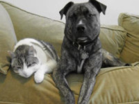 Frustrated with Stubborn Pet Odor in Your Home?